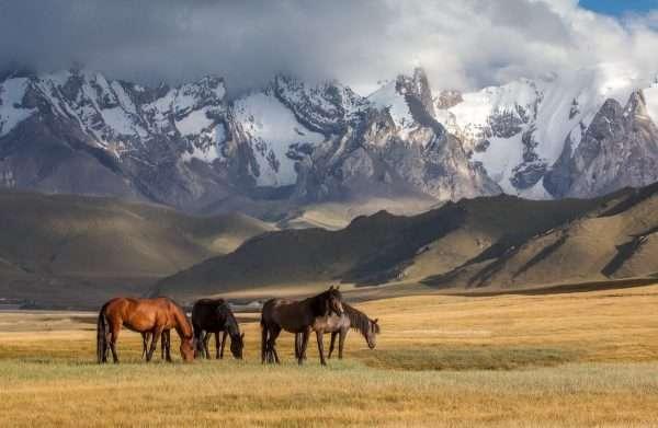 Типичный казахстанский пейзаж