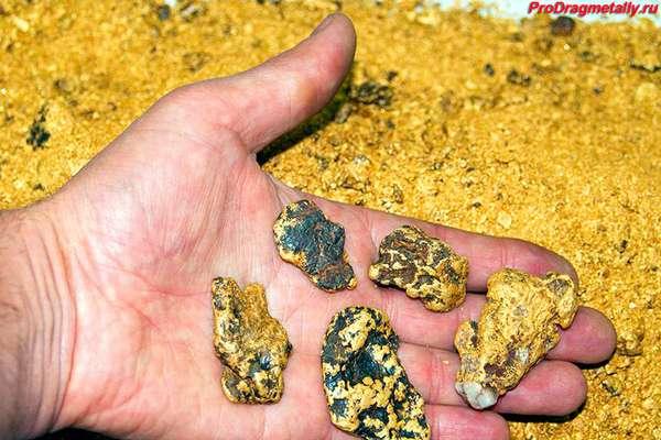 Золотые самородки в руке