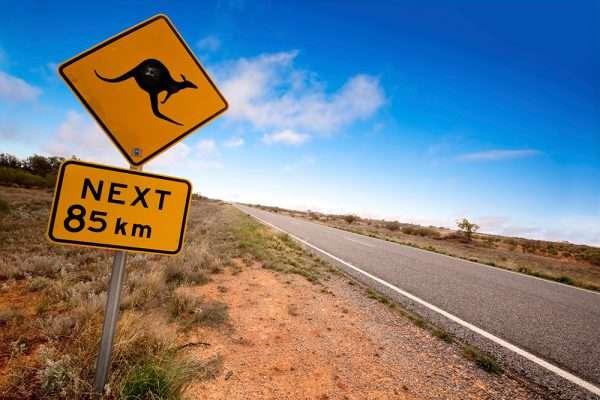 Знак, предупреждающий о кенгуру на дороге
